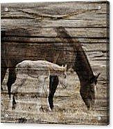Horses On Wood Acrylic Print