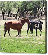 Horses Out Wickenburg Way Acrylic Print
