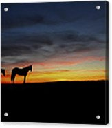 Horses Walking In The Sunset Acrylic Print