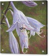 Hosta Flowers Acrylic Print