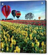 Hot Air Balloons Over Tulip Field Acrylic Print