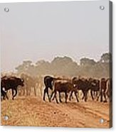 Hot Dry And Dusty Acrylic Print