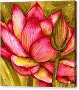 Hot Pink Acrylic Print