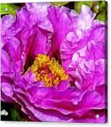 Hot-pink Flower Acrylic Print