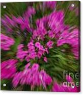 Hot Pink Flower Zoom Acrylic Print