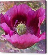 Hot Pink Poppy Acrylic Print