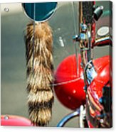 Hot Rod Coon's Tail Acrylic Print