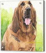 Hound Dog Watercolor Portrait Acrylic Print