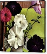 House & Garden Cover Illustration Of Petunias Acrylic Print