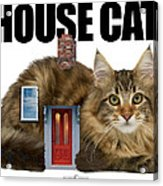 House Cat Acrylic Print