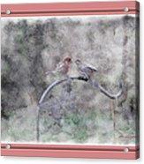 House Finch - Kiss Me Acrylic Print
