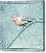 House Finch With Colored Sketch Effect Acrylic Print