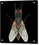House Fly Bedazzled Acrylic Print