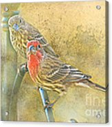 Housefinch Pair With Texture Acrylic Print
