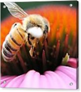 Hovering Bee Acrylic Print
