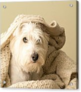 How About A Snuggle Card Acrylic Print