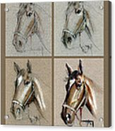 How To Draw A Horse Portrait Acrylic Print