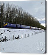Hst In The Snow  Acrylic Print