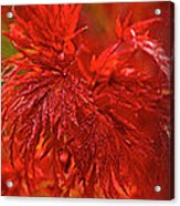 Hubble Galaxy With Red Maple Foliage Acrylic Print