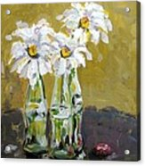 Hue Of A Daisy Acrylic Print