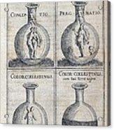 Human Development, 17th Century Artwork Acrylic Print