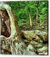 Human Eating Tree Acrylic Print