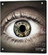 Human Eye Macro Acrylic Print by Elena Elisseeva