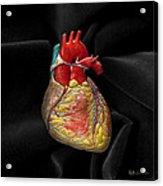Human Heart On Black Velvet Acrylic Print