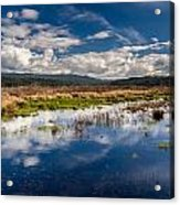 Humboldt Marshes In Spring Acrylic Print