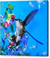 Hummer And Flowers On Acrylic Acrylic Print