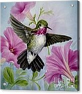 Hummer In Petunias Acrylic Print by Summer Celeste