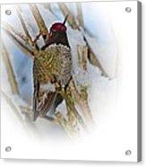 Humming Bird And Snow 4 Acrylic Print