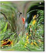 Humming Bird Digital Art Acrylic Print
