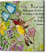 Humming Bird- Philipians Acrylic Print