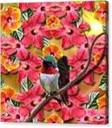 Hummingbird And Hibiscus Acrylic Print