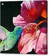 Hummingbird And Hibiscus Acrylic Print by Robert Hooper