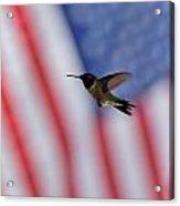Hummingbird Art 229 Acrylic Print