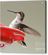 Hummingbird At The Feeder Acrylic Print