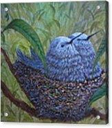 Hummingbird Babies Acrylic Print