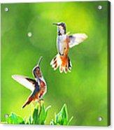Hummingbird Dance  Acrylic Print