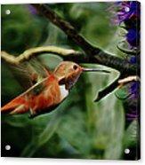 Hummingbird Dreams Digital Art Acrylic Print