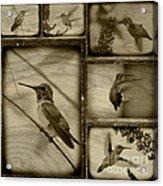 Hummingbird Family Portraits Acrylic Print