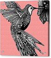 Hummingbird Flight 18 Acrylic Print