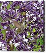 Hummingbird Flowers Acrylic Print