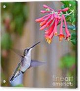 Hummingbird Happiness Acrylic Print