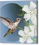 Hummingbird Heaven Acrylic Print by Bonnie Barry