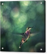 Hummingbird Hovering Acrylic Print by William Schmid
