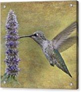Hummingbird In The Mint Acrylic Print