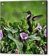 Hummingbird In The Rain Acrylic Print