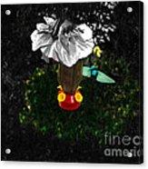 Hummingbird In The Spotlight Acrylic Print by Al Bourassa